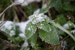 les terres gelées du beaujolais