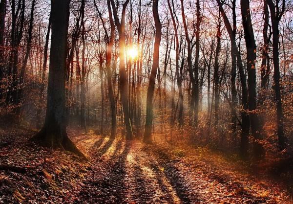 forêt de la frange verte