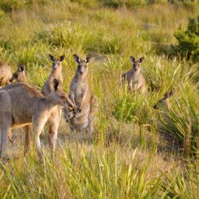 Un raid aux antipodes - XPD ARWC 2016 Australia